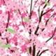 흩날리는 벚꽃라이브배경6