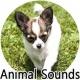 동물 사운드 : 사진과 소리 재생