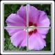 그림(숫자) 퍼즐 맞추기 게임(15퍼즐)