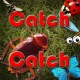 캐치캐치 (벌레를 잡아라)